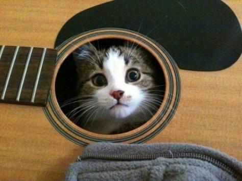 【猫画像】間違えたギターの使い方