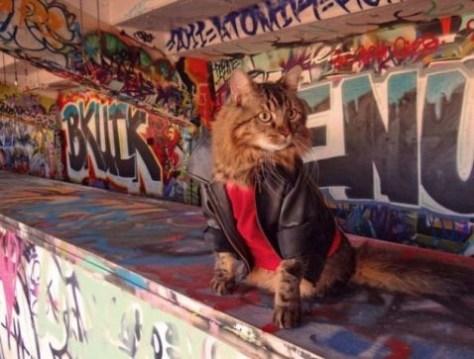 【猫画像】おしゃれキャット