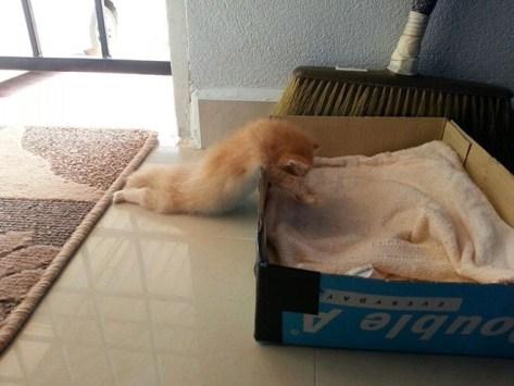 【猫画像】力尽きた!?