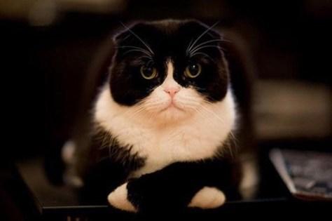 【猫画像】話聞こうか?