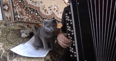 cat_and_accordion06