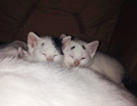 worried_looking_kitten05