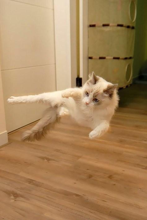 【猫画像】浮遊!
