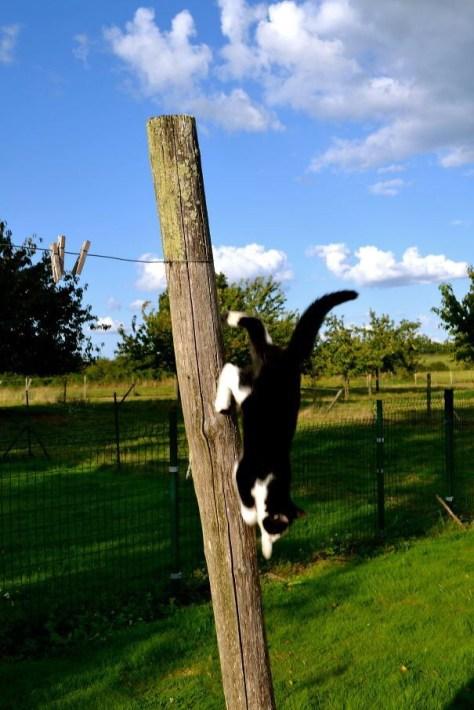 【猫画像】重力関係ナシ