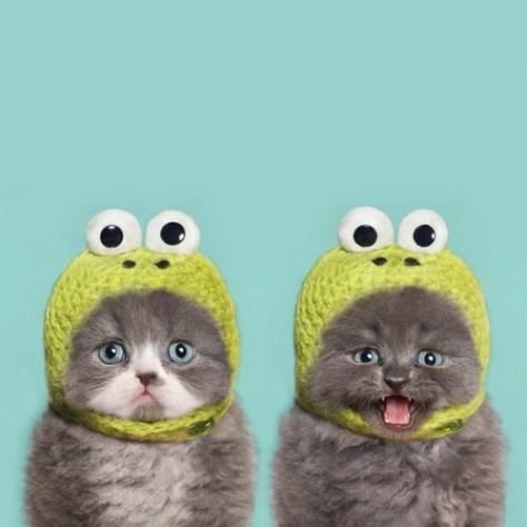 【猫画像】カエルとカエル
