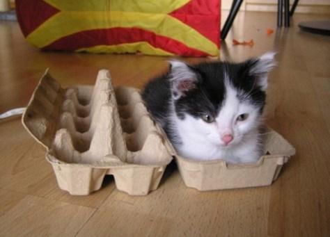 【猫画像】1パック