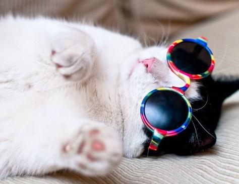 【猫画像】オシャレ猫
