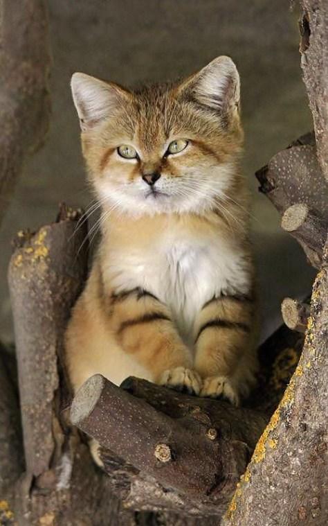 【猫画像】ねこ?