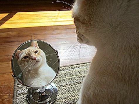 【猫画像】うっとり