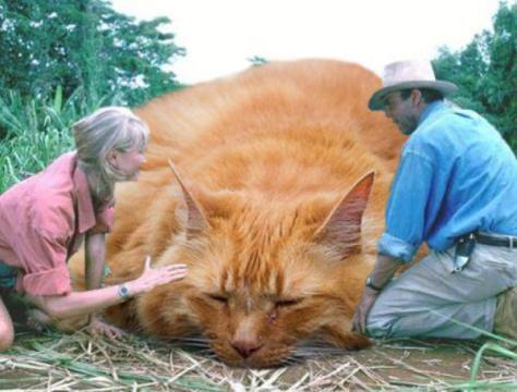 jurassic_cats_05