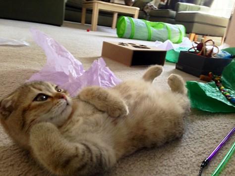 pro_posing_cats06
