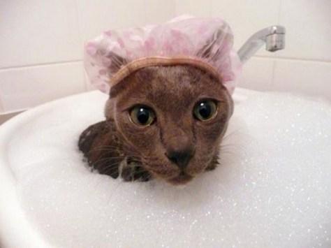 【猫画像】入浴中