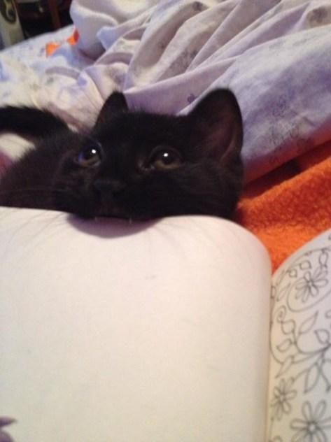 【猫画像】遊ぼ