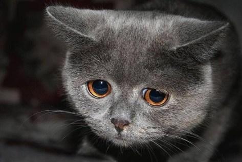 【猫画像】ガッカリ顔
