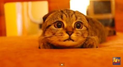 cat_get_ready02