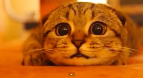 cat_get_ready06