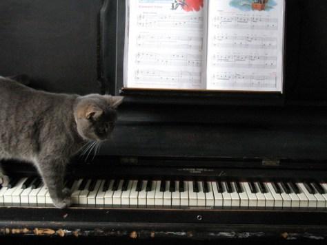 cat_homes05