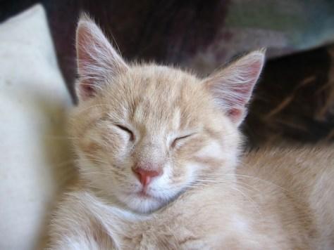 cat_homes06