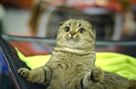 【猫画像】軽くショックを受けた猫