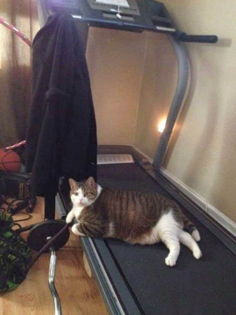 【猫画像】いや、運動前の休憩・・・