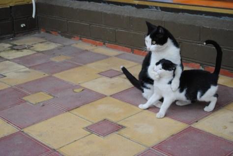 【猫画像】シッ!