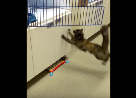 cat_cant_jump_from_waxfloor04