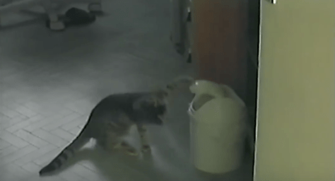 cat_vs_trashcan05