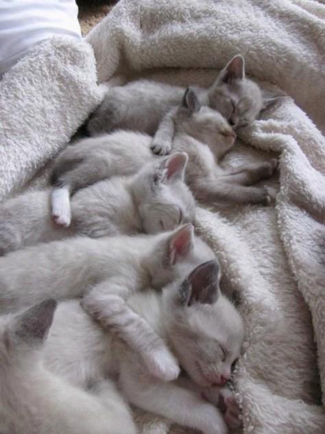 【猫画像】みんなで添い寝