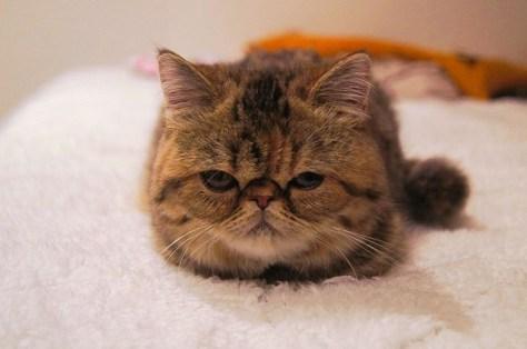 【猫画像】ムッスリ