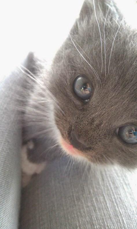 【猫画像】ドキッ