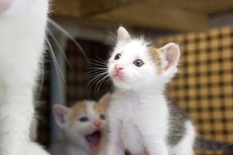 【猫画像】尊敬の眼差し