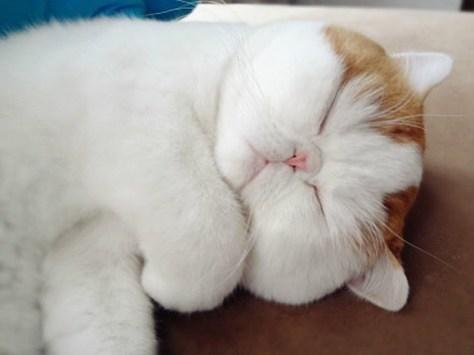 【猫画像】熟睡・・・