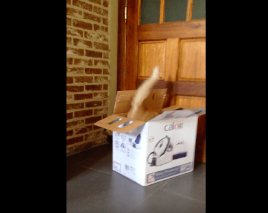 cat_moves_box06