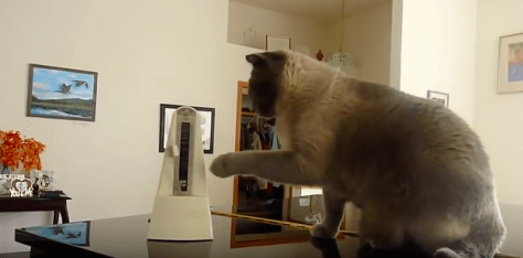 cat_vs_metronome02