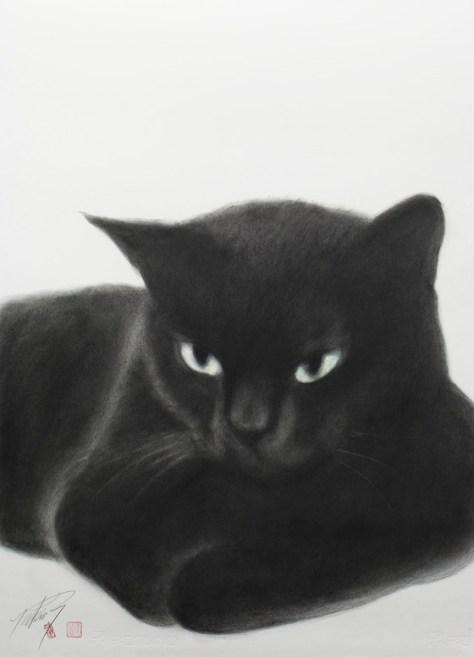 yukio_takahashi_cat01