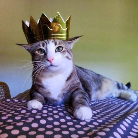 【猫画像】猫様