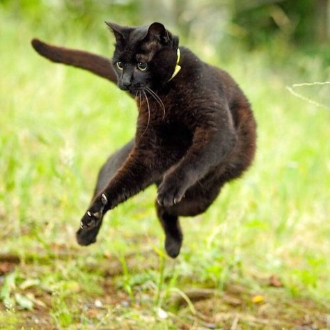 【猫画像】身軽なっ!