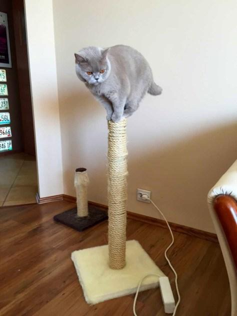 【猫画像】バランス良すぎ!