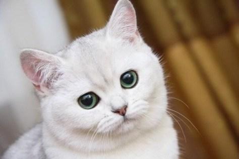 【猫画像】何さ?