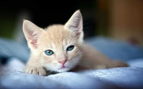 【猫画像】まだ眠い!?