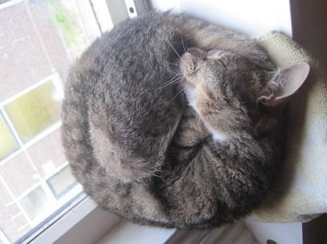 【猫画像】丸い猫