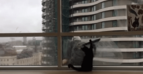 cat_and_window_cleaner03