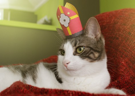 tiny_hats_on_cats09