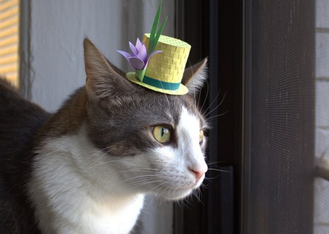 tiny_hats_on_cats13
