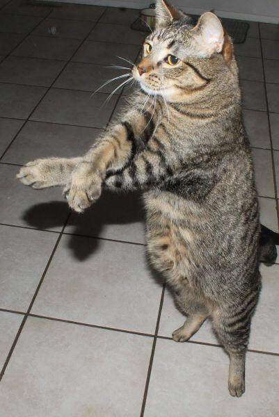 【猫画像】ス、スキがない!?