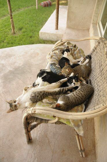 【猫画像】1匹だけ体勢が変?