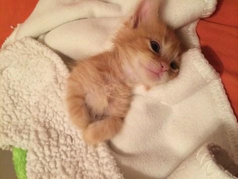 【猫画像】まだ寝足りない・・・