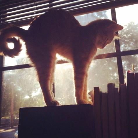 【猫画像】伸びのシルエット