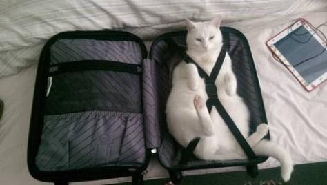 【猫画像】準備OK