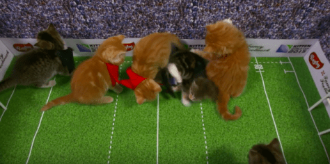 kitten_worldcup_2015_05